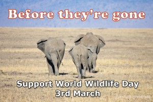 Celebrate world wildlife day on 3 March 2016