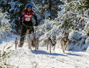 Sled dog race competitor