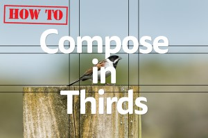Title photograph How To compose in thirds