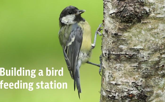 Building a bird feeding station