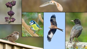 6 pictures of birds and trees