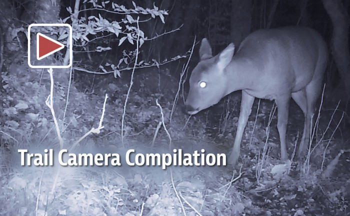 Still frame from Trail Camera compilation video 2017