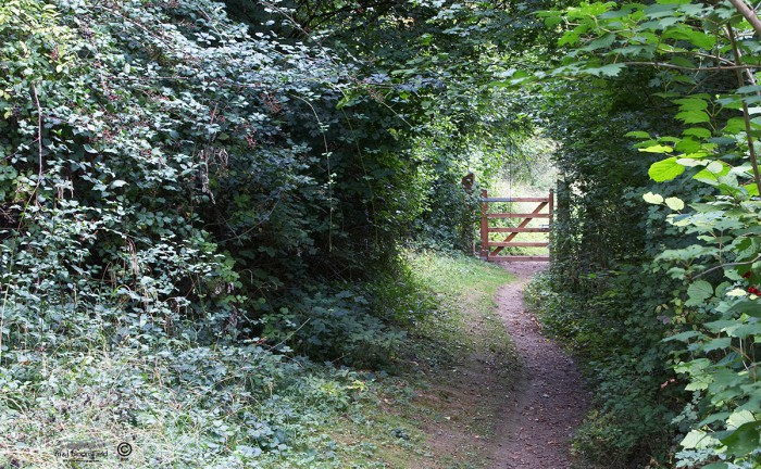 picture of a path and gate on a nature reserve