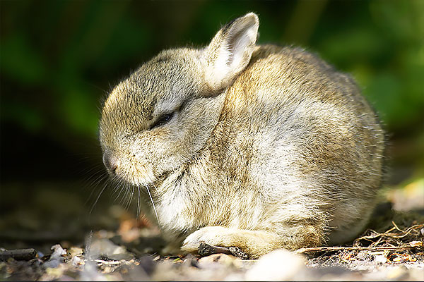 Picture of a baby rabbit just one of the prints on sale at our shop